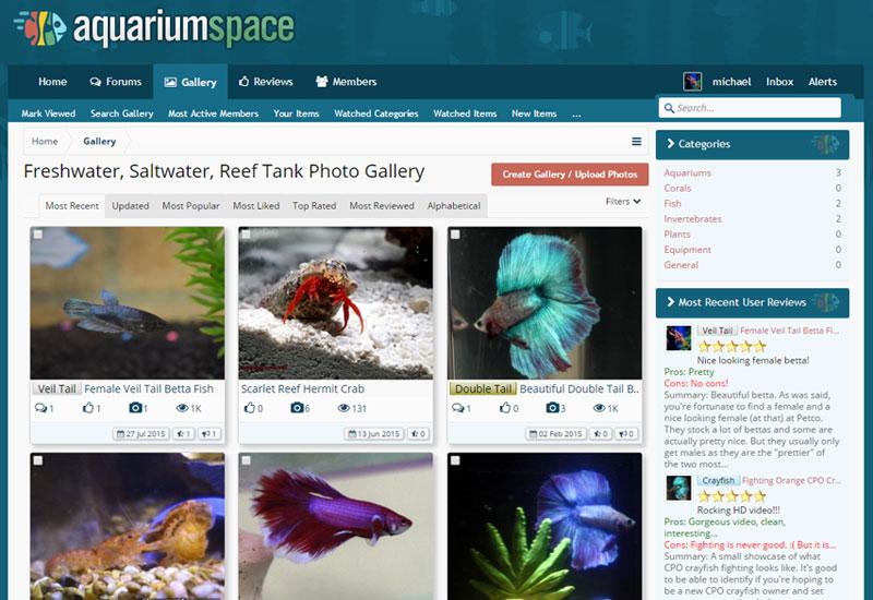 Aquarium Space Community 800
